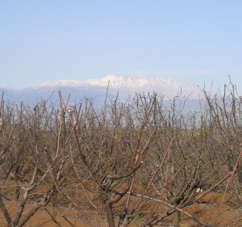 Apple orchard below Mount Hermon, Golan Heights, Israel | © Melech ben Ya'aqov, Karaite Insights